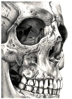skull drawing, skulls, drawing art, drawing skeleton, art prints, bone drawings, skull art, tattoo, drawing skull