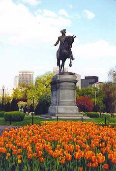 Boston, MA, USA - Tulips amazing!