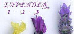 LAVENDER: Choosing,Planting,Growing,Pruning,Harvesting and Using lavender plants