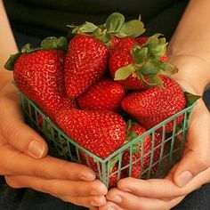 Pick the Best Fruits and Berries | Reader's Digest