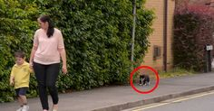 Every Day, This Cat Follows The Little Boy To School. When You See Why, You'll Be Blown Away. Wow.