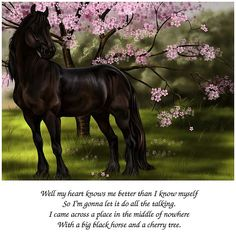 Black Friesian in the Spring.