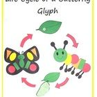 Life Cycle of a Butterfly Glyph and Shape Recognition