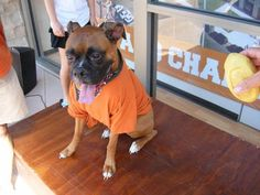 FACT: Dogs are happiest when wearing burnt orange! #Hookem #UT #Pets