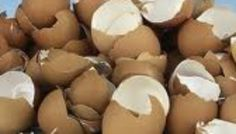 Eggshells enrich the soil with calcium...I always sprinkle them around my tomato plants. My aunt has an amazing green thumb and always shares her great knowledge!
