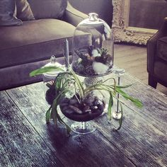 #zgallereiMoments #homeDecor #house #designer #coffeeTable #chic