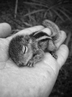 Rob the baby squirrel - Paul Williams