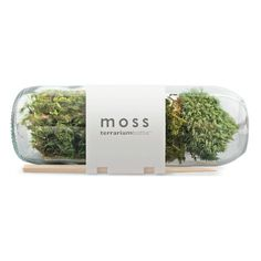 Potting Shed Creations :: Moss Terrarium Nice gift for new job / office