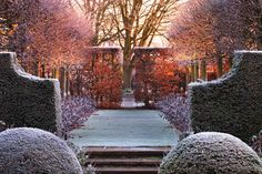 Clipped boxwood (Clive Nichols photography)