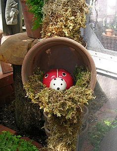 critter in clay pot