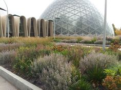 The perennial garden (after a season of growth) installed by Roy Diblik at the entrance to Mitchell Park Horticultural Conservatory (The Domes). Photo by Roy Diblik