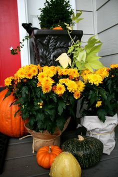 Fall Porch | Halloween | Harvest | Decorating for Fall | TodaysCreativeBlog.net