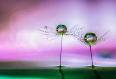 Two planets by Miki Asai. Amazing photographic artwork.