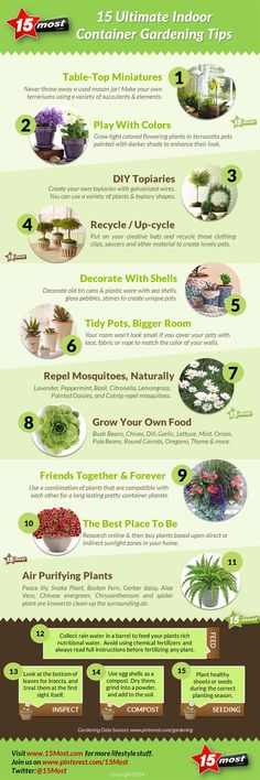 Infographic 15 Ultimate Indoor Container Gardening Tips Infographics Creator | Infographics Creator