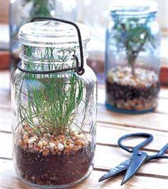 Terrarium Gardens--Herbs du Jar