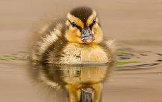 ducks!!!!