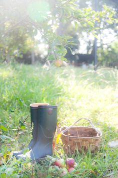 Apple picking boot, end of summer, season, autumn, farm life, country life, garden, summer days, apple orchard