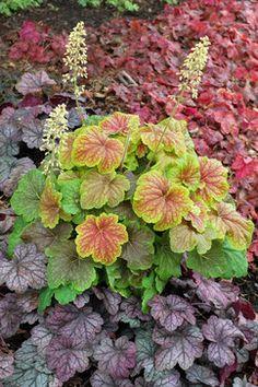 Pacific Northwest Gardener's November Checklist