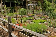 Raised beds at the Berkshire Botanical Gardens in Massachusetts. Requires a large initial investment of time and energy, but after that, it would be very easy to maintain.