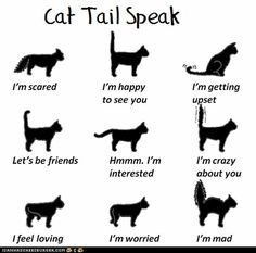 Do you know how to interpret your cat's language? This simple tail guide will help you understand how your cat is feeling!