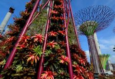 """supertrees in singapore. these """"trees"""" will collect rainwater, generate solar power, and act as venting ducts for the 101-acre conservatory nearby."""