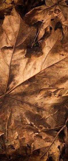 Autumn. S)