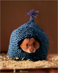 Knitting Pattern For Hamster Jumper : cute knits for animals on Pinterest Dog Sweaters, Knitting and Icelandic Horse