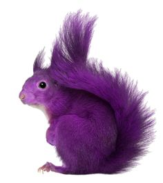 wow! Purp squirrel!