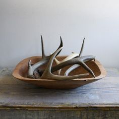 antlers in a bowl