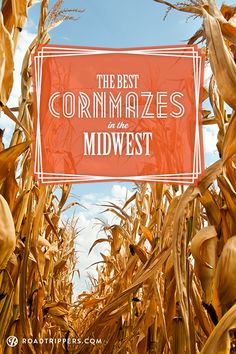 Here are 5 amazing corn mazes to get lost in the Midwest!