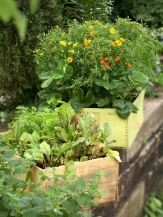 Reuse containers like these old wine crates for inexpensive planters. See more ideas for container gardens: http://www.bhg.com/gardening/vegetable/vegetables/grow-vegetables-in-containers/?socsrc=bhgpin040413winecratecontainer=3