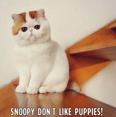 hahah this cats face