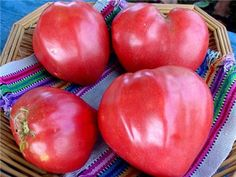 Pink Oxheart Tomatoes | Baker Creek Heirloom Seed Co