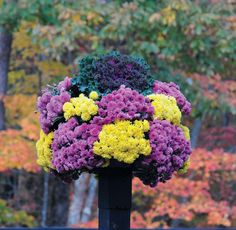 Fall Pots with Mums!