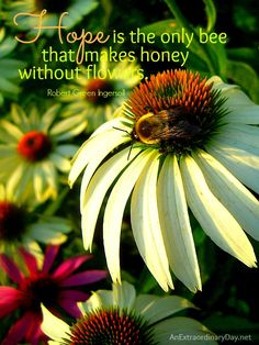 an extraordinayday.net | ... bee that makes honey without flowers - Quote :: AnExtraordinaryDay.net