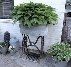 Galvanized trough planted with hostas and then placed on top of an old sewing machine base.