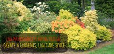 Low-Maintenance Planting Design: More Than Just Plant Selection – North Coast Gardening