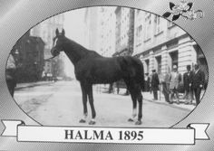 Halma- 1895 Kentucky Derby Winner