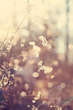 wall art, photograph, white winter, color, creami tone, soft light, flower warm, winter flowers, photo shoots