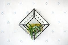 Pyramid Wall Sconce Terrarium //made with recycled by megamyers, $55.00