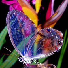 nature's watercolors.