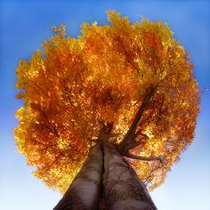 angles, fall leaves, orang, tree, color, blue skies, autumn look, branches, fall beauty