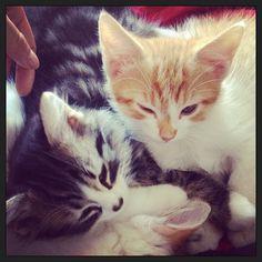 . crazi cat, cat lover