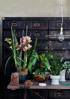plants + industrial drawers