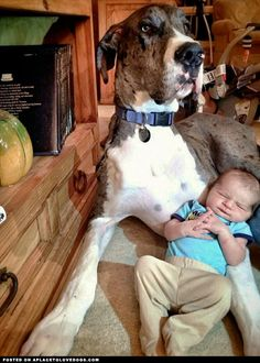 Great Dane And Baby