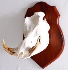 Warthog shield mount.