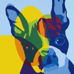 Boston Terrier - Am I blue?  #bostonterrier