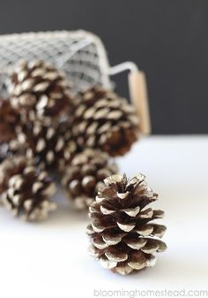 gold tipped pinecone...