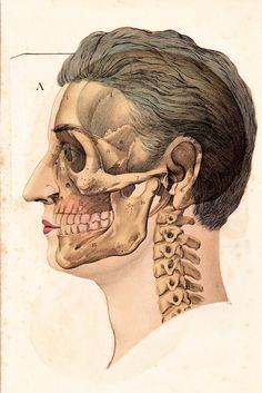 Two Sides To Every Story B - FREE SHIPPING 12x18 Man Science Medical Biology Insides Vintage Cream Aged Diagram Bones Skull Skeleton Poster. $58.00, via Etsy. randomawesomesauce