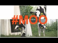 "▶ Farm Lines (Robin Thicke - ""Blurred Lines"" PARODY) - YouTube"